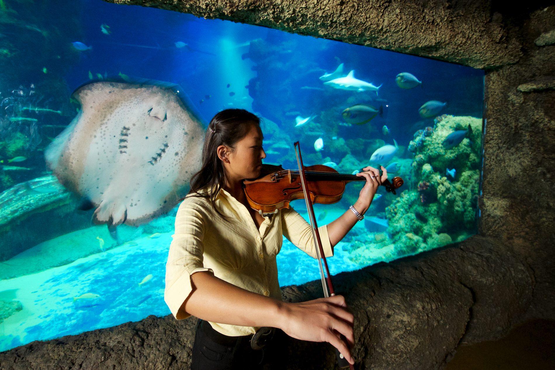 The Sea Life London Aquarium Pioneers The Uk S First