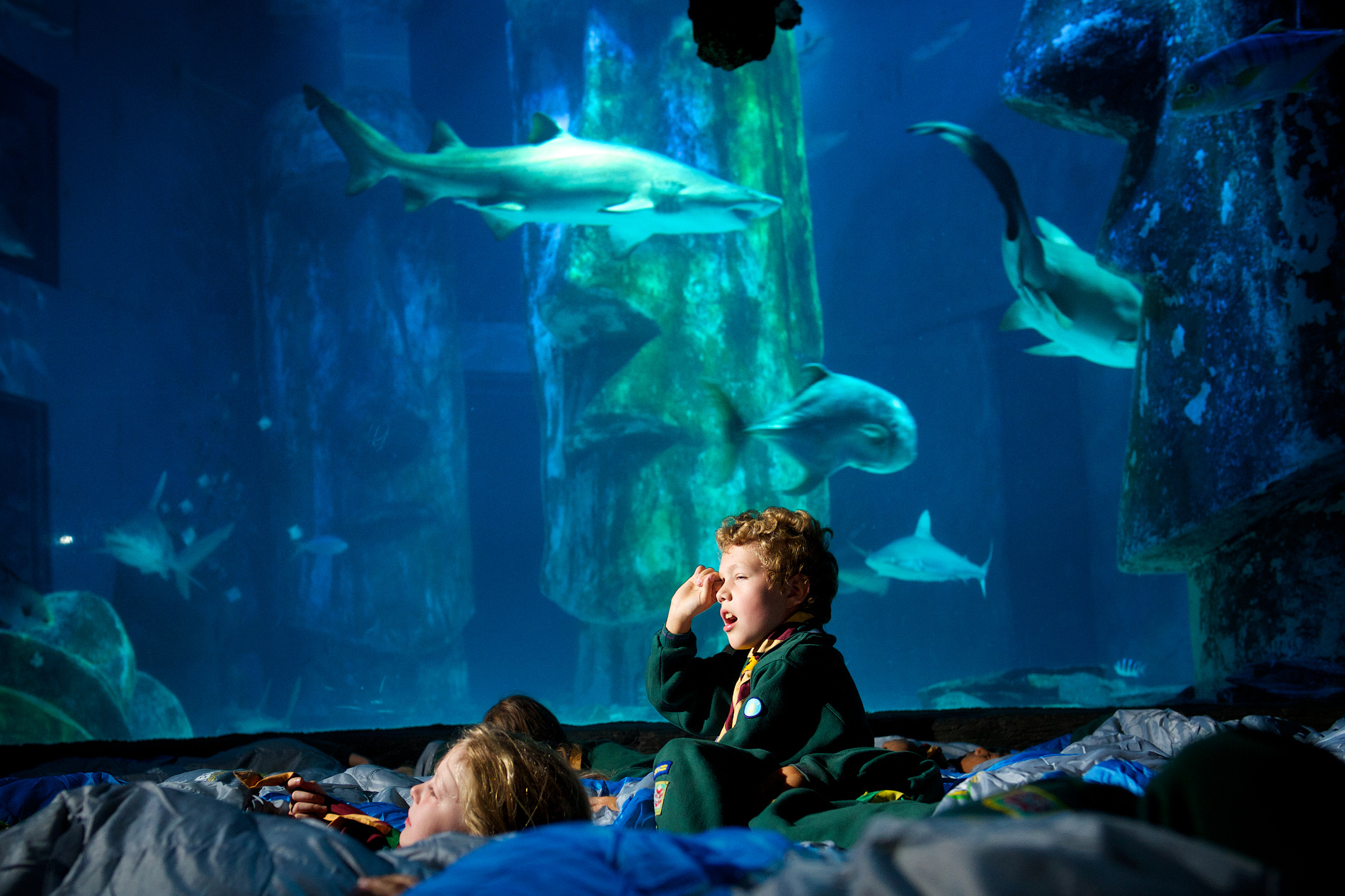 Scouts Stage Shark Sleep In At The Sea Life London