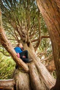 The 45 foot high Nootka Cypress evergreen in Wallington, Northumberland has been revealed as the best tree to climb in the country with Jessica Swales, aged 8, tackling its branches.