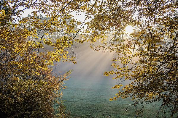autumn-forest-143813
