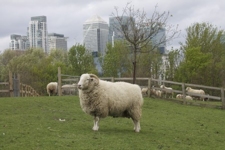 Spring Cleaning with Shaun the Sheep at Mudchute Farm