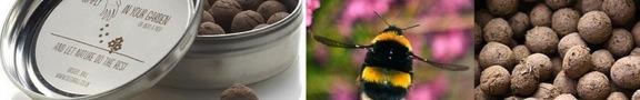 PN - Bees