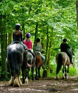 Great School Holiday Ideas From Visit Essex Southend horse riding r