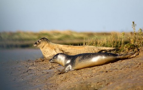 Great School Holiday Ideas From Visit Essex Wallasea Island  seals r