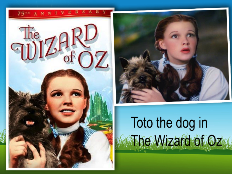 toto dog wizard of oz collage