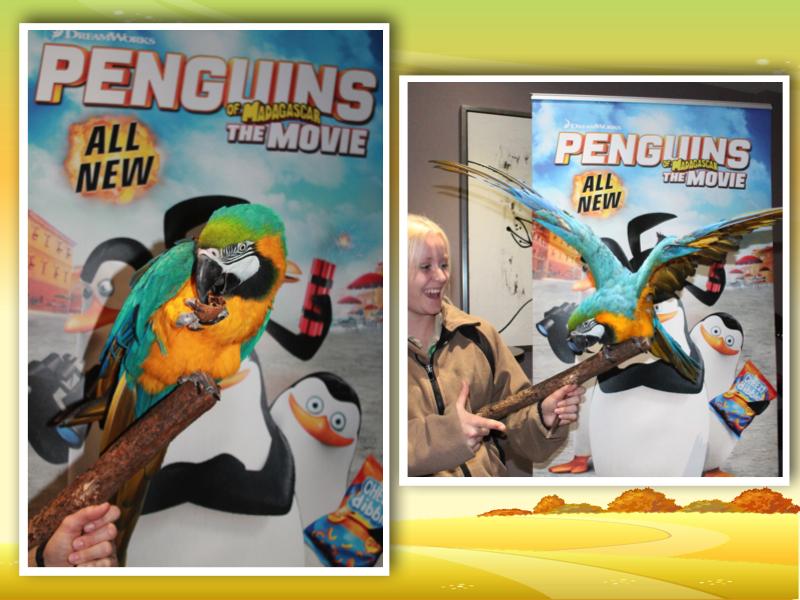Macaw arara bird chessington collage