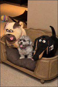 The Secret Life of Pets Kevin Hart London Mums magazine 104