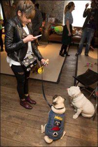 The Secret Life of Pets Kevin Hart London Mums magazine 187