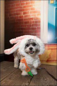 The Secret Life of Pets Kevin Hart London Mums magazine 197