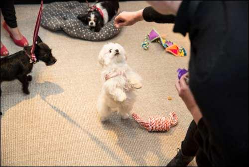 The Secret Life of Pets Kevin Hart London Mums magazine 43