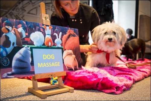 The Secret Life of Pets Kevin Hart London Mums magazine_126