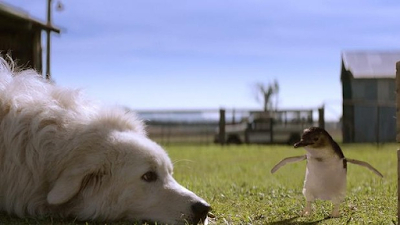 dogs in films Oddball and the Penguins