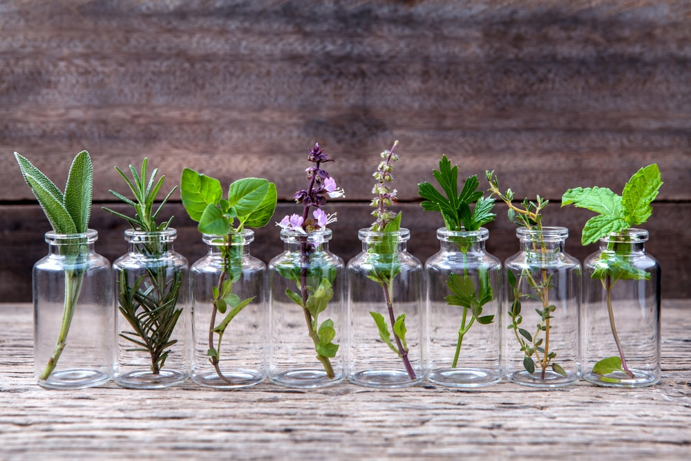 The-History-And-Benefits-Of-Essential-Oils